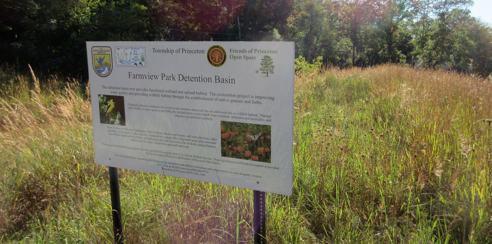Extended Detention Basin